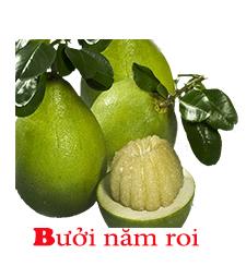 buoi-nam-roi-malanaz-shopping